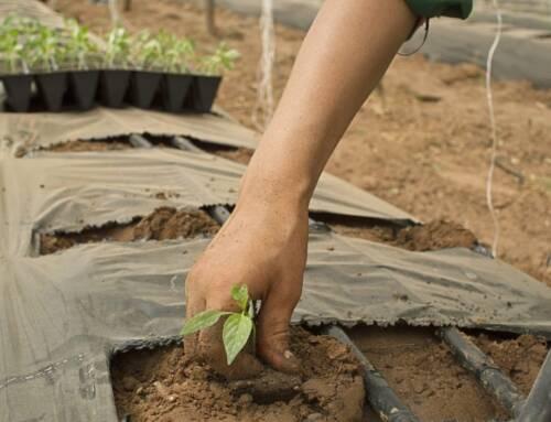 Governo anuncia suspensão de 384 mil cadastros da agricultura familiar