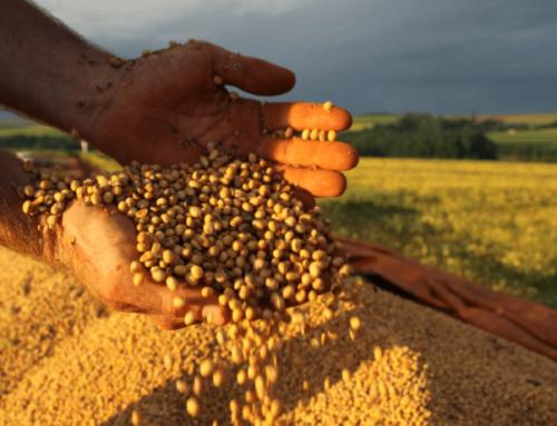 Soja disponível em Mato Grosso tem aumento considerável e preço médio vai a R$ 97
