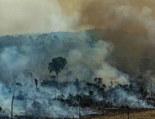 Governo federal proíbe queimadas por 120 dias