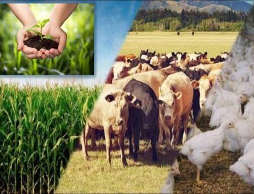 Pib agropecuário deve crescer 1,5% em 2020