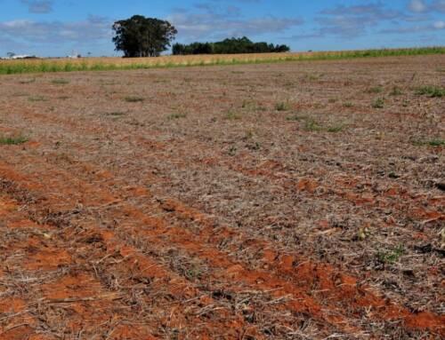 Falta de chuvas faz sojicultores atrasar início do plantio em Mato Grosso