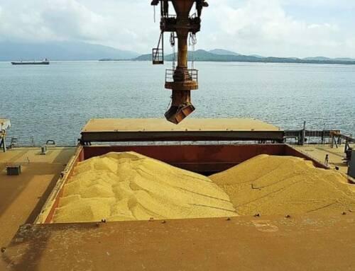 IMEA prevê que parte da soja de Mato Grosso que iria ao mercado interno vai para o exterior