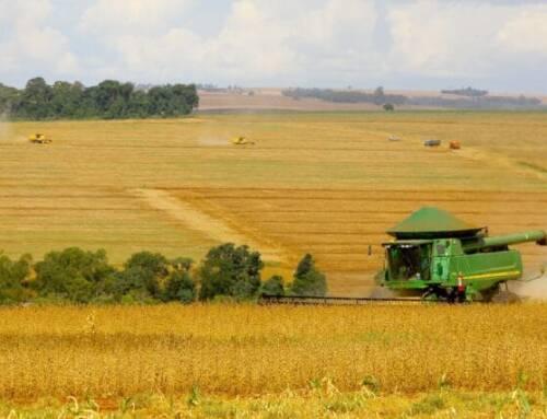 Safra do soja deve totalizar 131 milhões de toneladas, diz SNA
